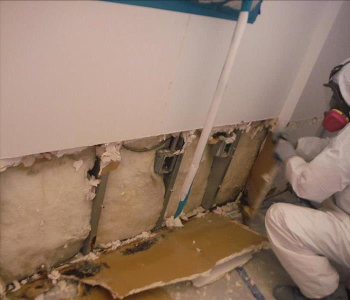 Mold Remediation- Hollywood