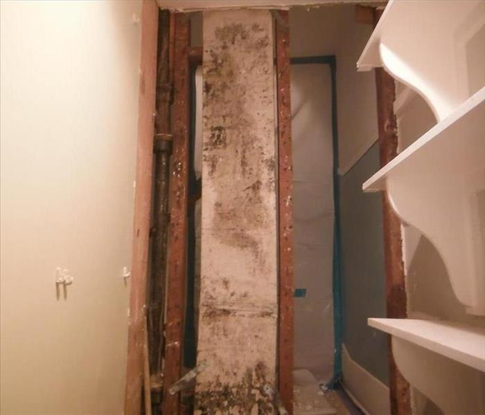 Mold Remediation in Hollywood Hills