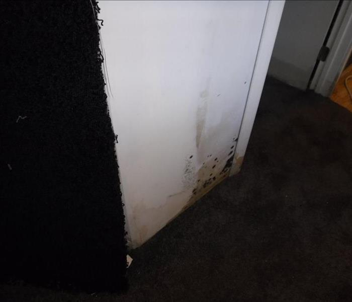 Mold Remediation in Los Feliz