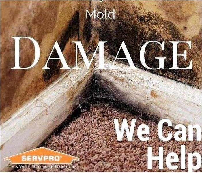Mold Remediation The Relationship Between Carpets & Mold