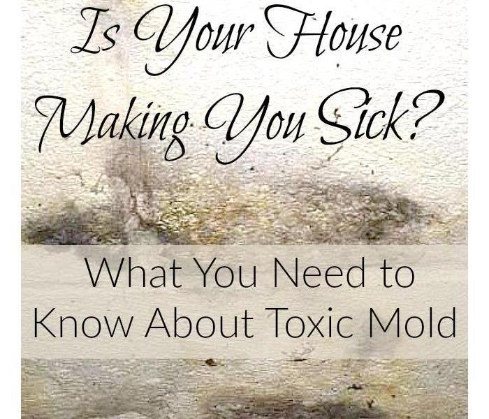 Mold Remediation Facts on Toxic Mold