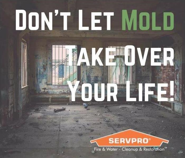 Mold Remediation How Fast Can Mold Spread Throughout a Home?