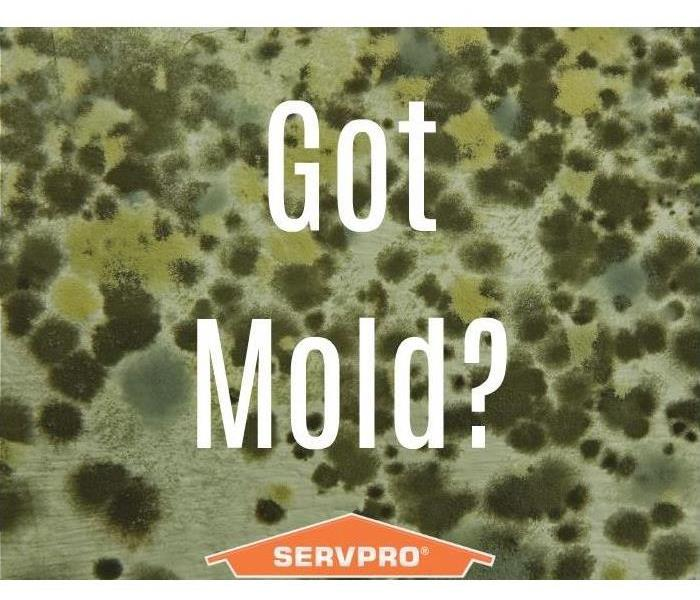 Mold Remediation Mold in Winter