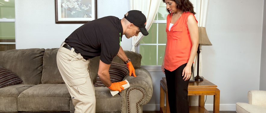 Hollywood Hills, CA carpet upholstery cleaning